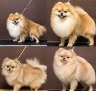 Dog grooming, cats, cats of all breeds, Alekseevka